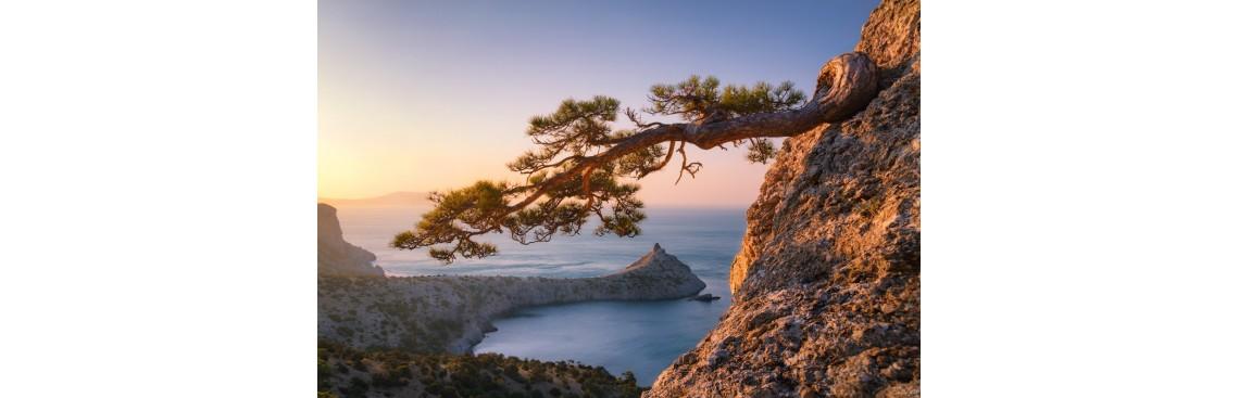 II конференция по практической трихологии «Крымская осень -2019»